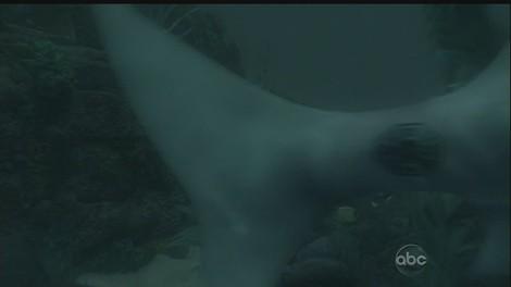 6x02_dharma_shark.jpg